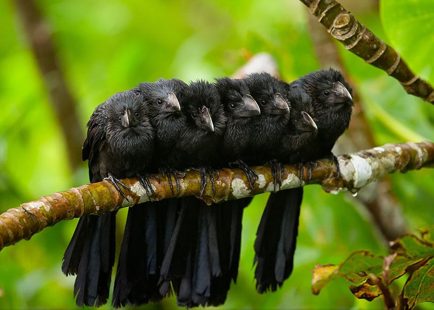 Beautiful Cuddling Birds photos (5)