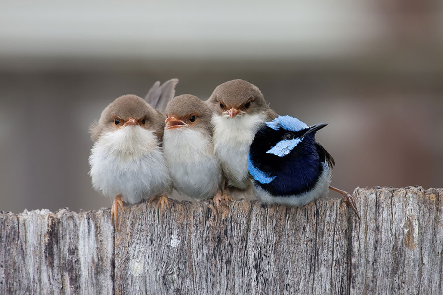 Beautiful Cuddling Birds photos (6)