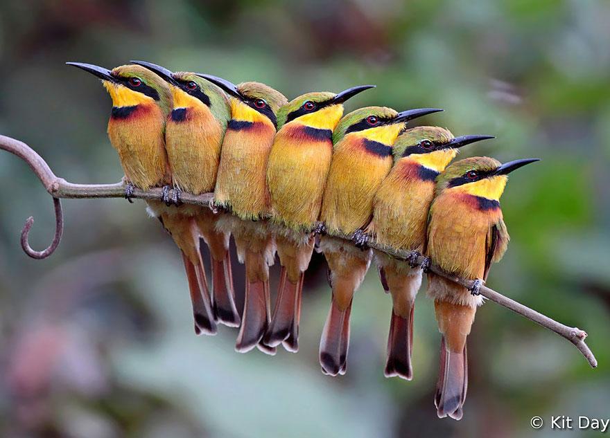 Beautiful Cuddling Birds photos (7)