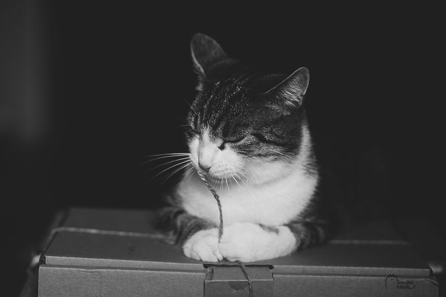 Cats & Kittens Black and White Photography (1)