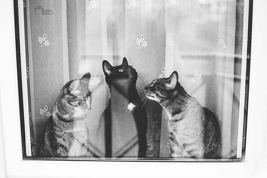 Cats & Kittens Black and White Photography (13)