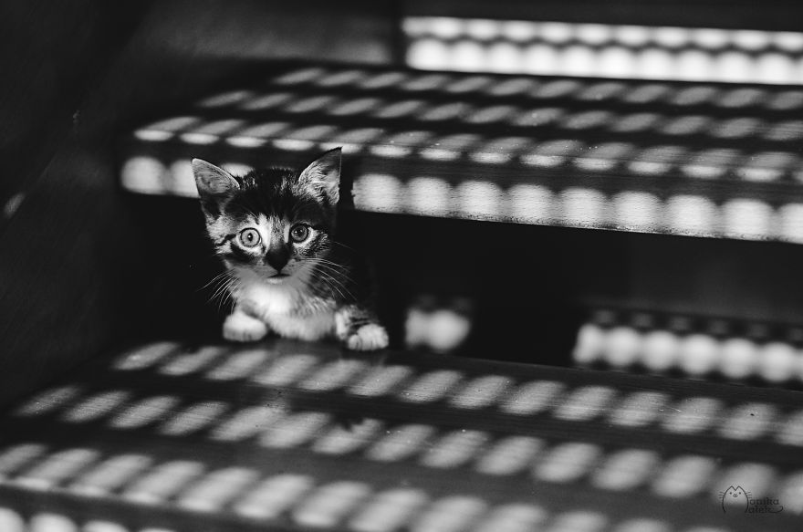 Cats & Kittens Black and White Photography (14)