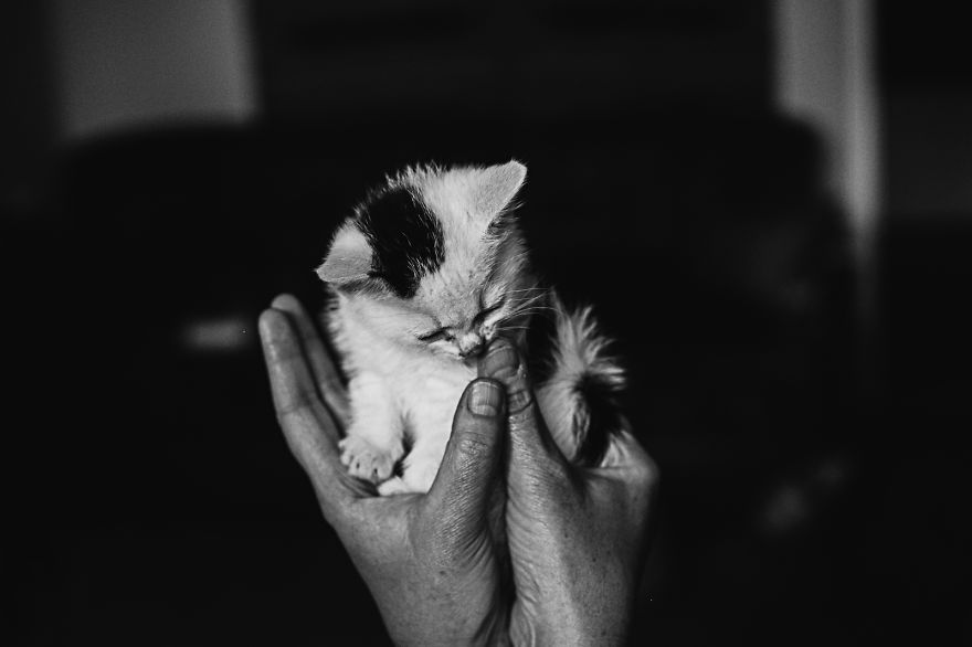 Cats & Kittens Black and White Photography (17)