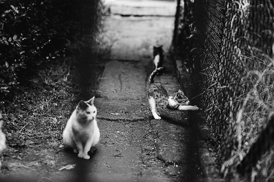 Cats & Kittens Black and White Photography (3)