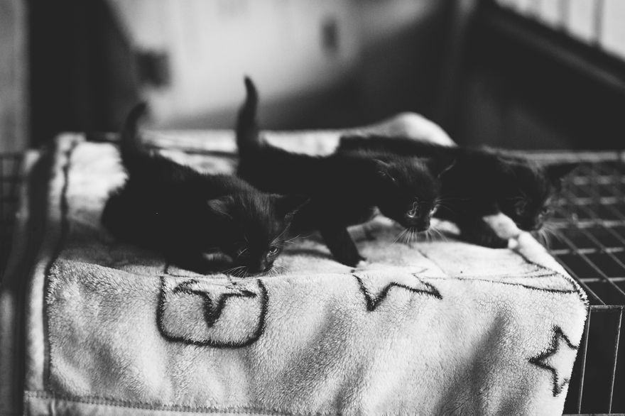 Cats & Kittens Black and White Photography (9)