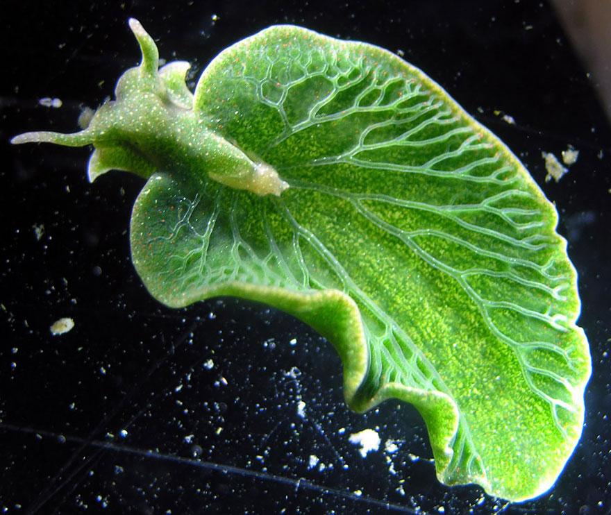 Most Colorful Sea Slugs on Earth (1)