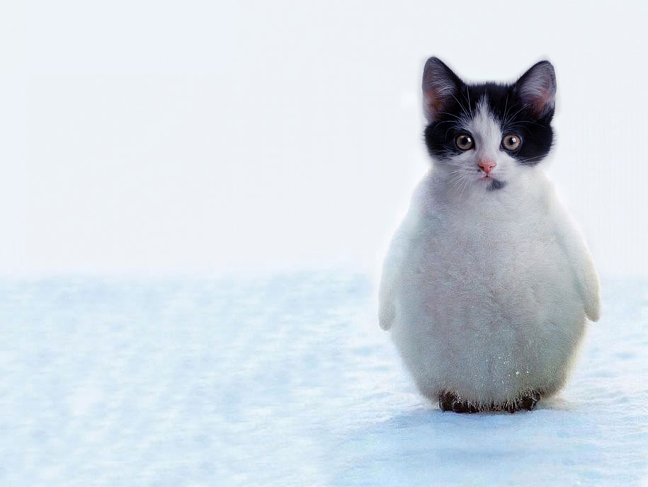 15 Creative Animal Surreal Photos (13)