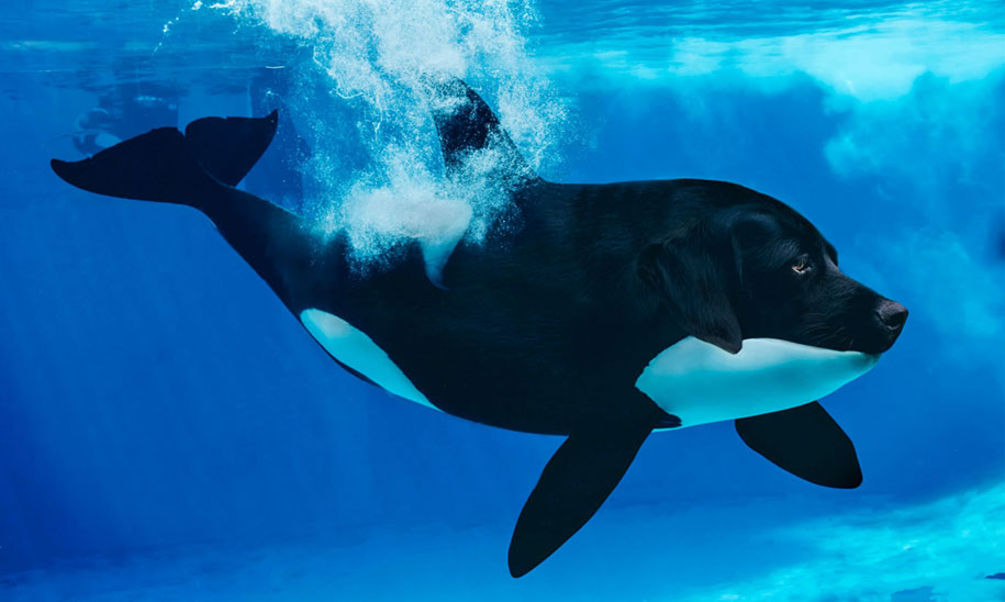 15 Creative Animal Surreal Photos (14)