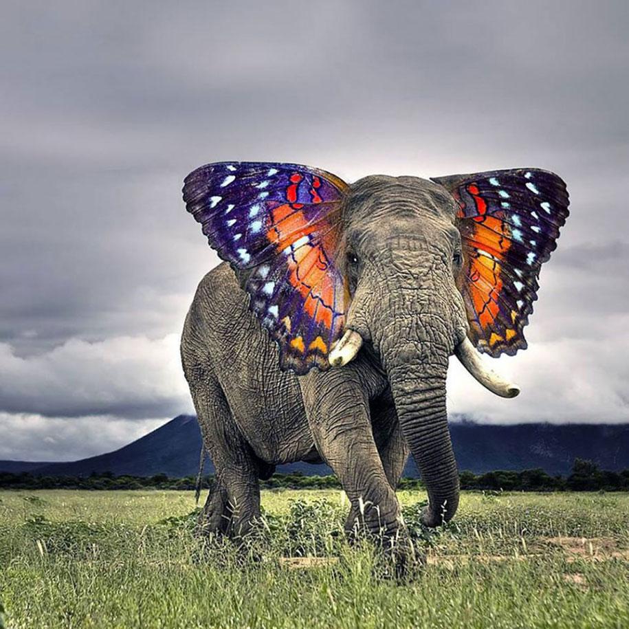 15 Creative Animal Surreal Photos (2)