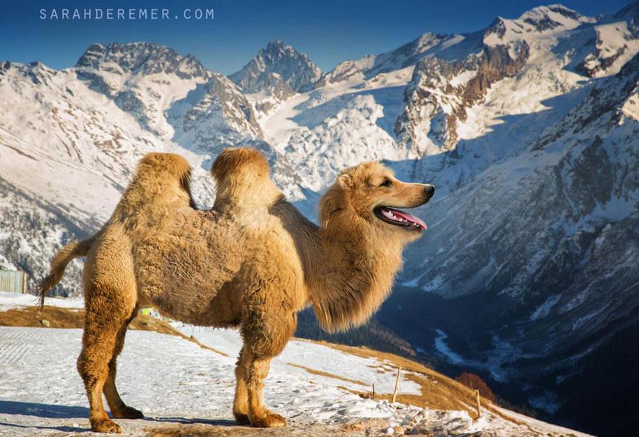 15 Creative Animal Surreal Photos (3)