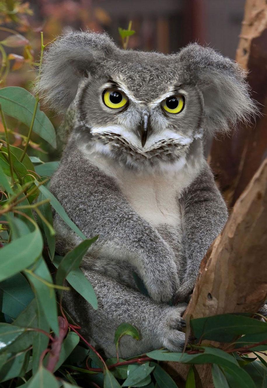 15 Creative Animal Surreal Photos (4)