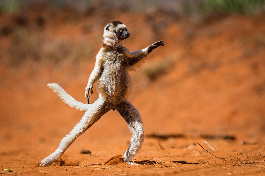 Comedy Wildlife Photography Awards 2015 (9)