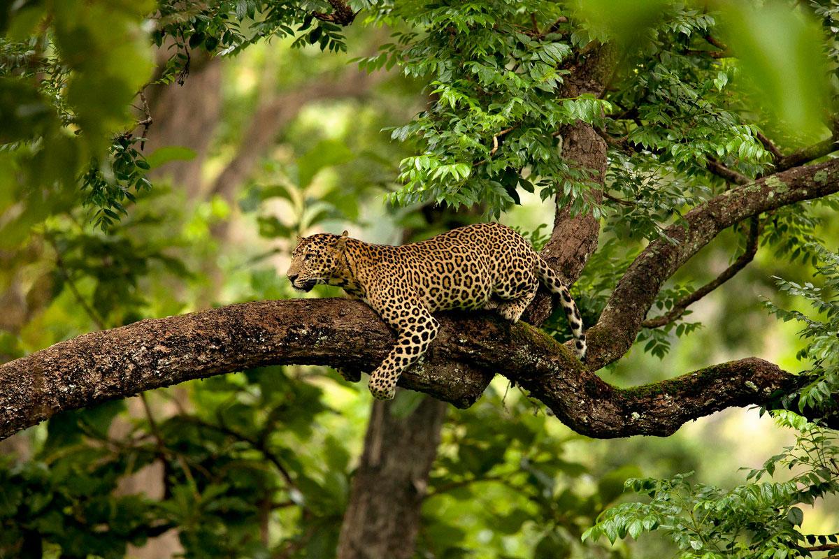 14. Tree Hugger By suyash-keshari