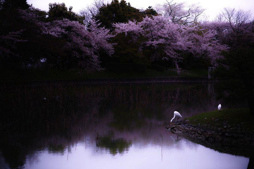 Cherry Blossom in Japan from National Geographic (13)