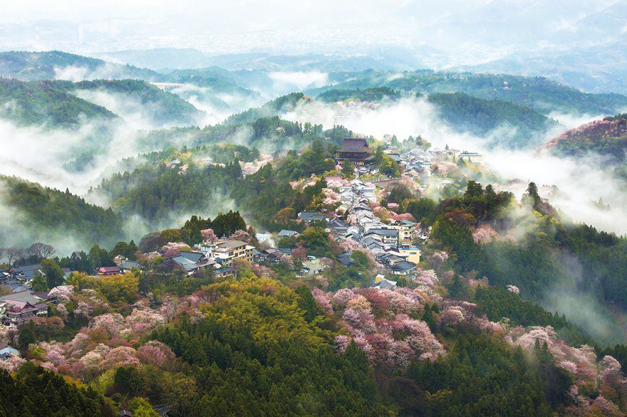 Cherry Blossom in Japan from National Geographic (4)
