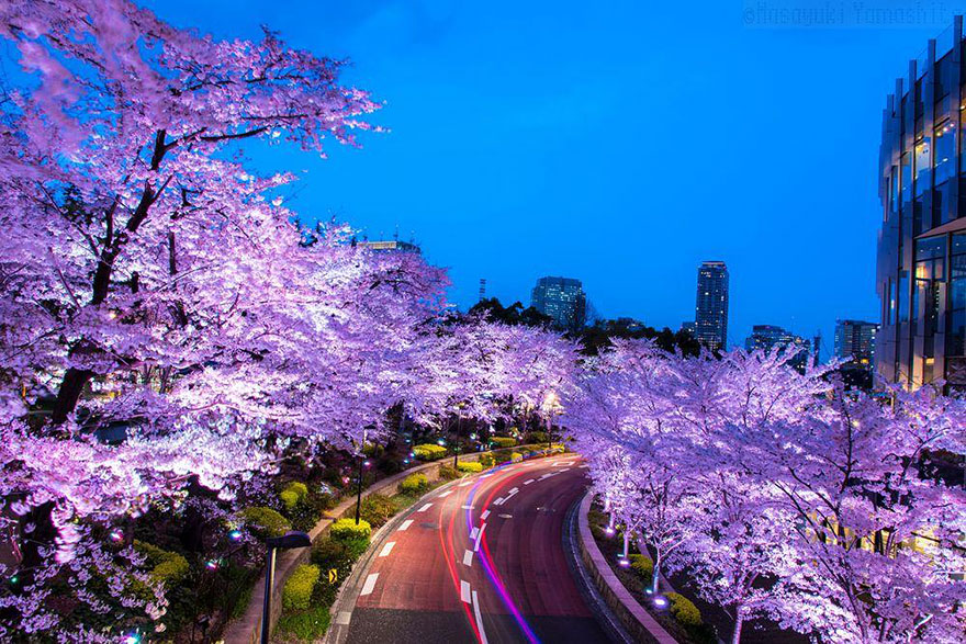 Cherry Blossom in Japan from National Geographic (6)