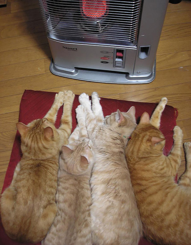 Cats Like Warmth (19)