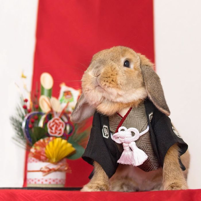 Cute Photographs of Most Stylish Bunny (11)