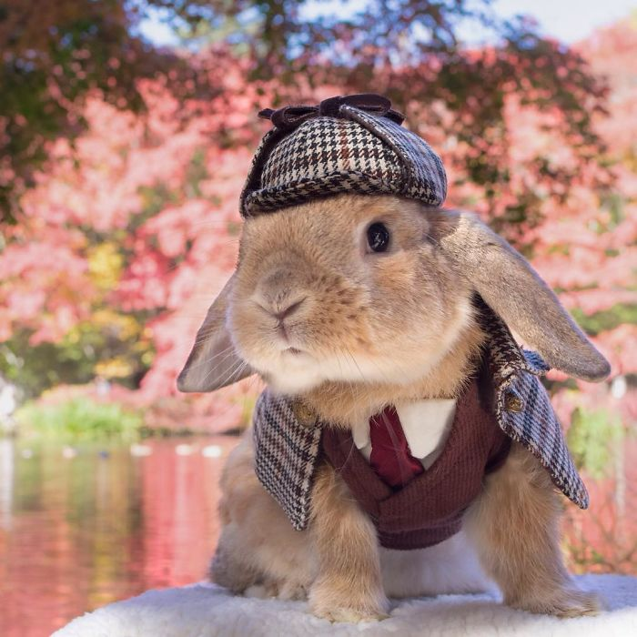 Cute Photographs of Most Stylish Bunny (12)