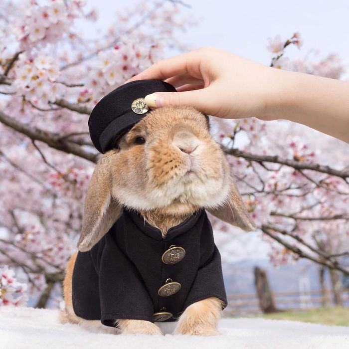Cute Photographs of Most Stylish Bunny (17)