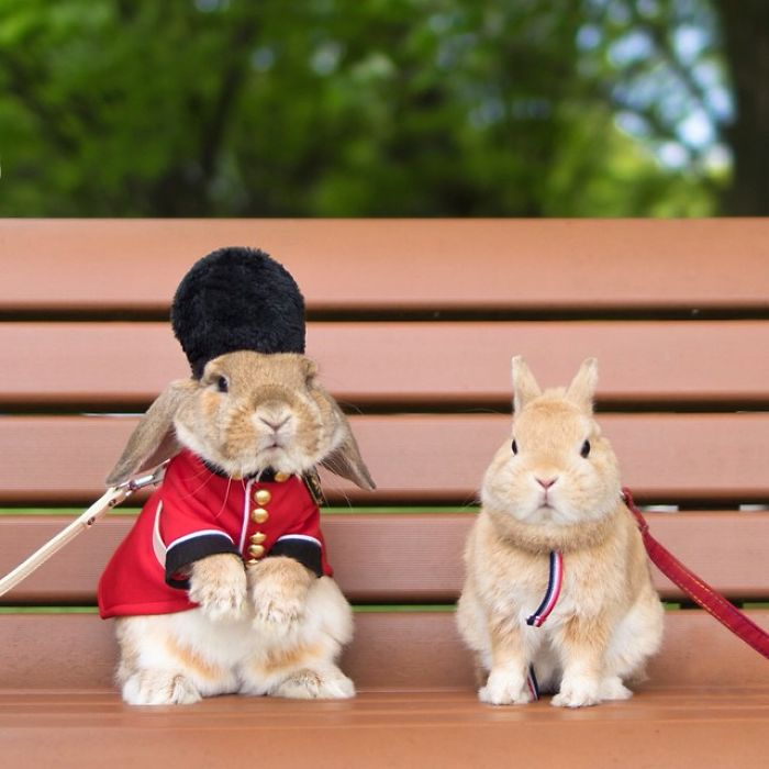 Cute Photographs of Most Stylish Bunny (20)