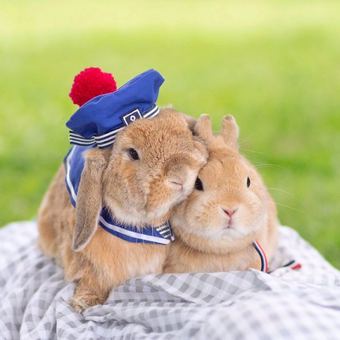 Cute Photographs of Most Stylish Bunny (21)