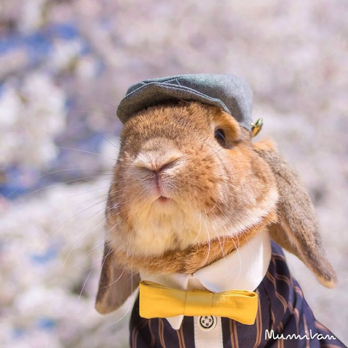 Cute Photographs of Most Stylish Bunny (22)