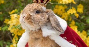 Cute Photographs of Most Stylish Bunny (23)