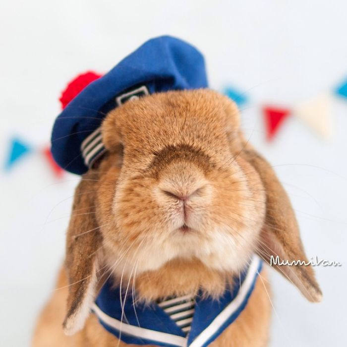 Cute Photographs of Most Stylish Bunny (24)