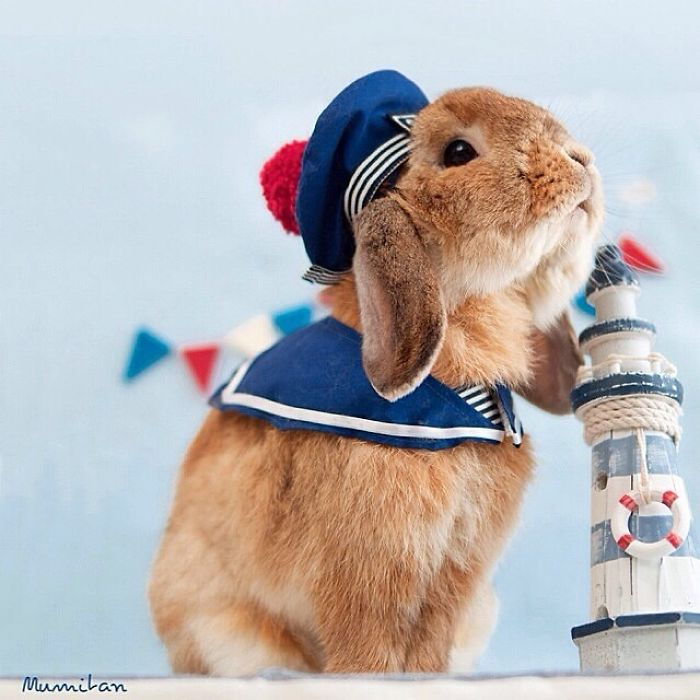 Cute Photographs of Most Stylish Bunny (7)
