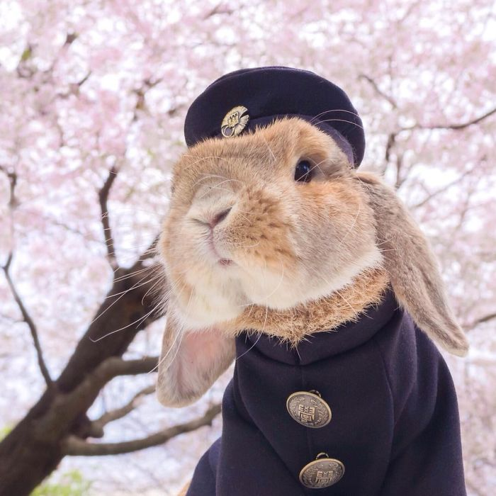 Cute Photographs of Most Stylish Bunny (8)