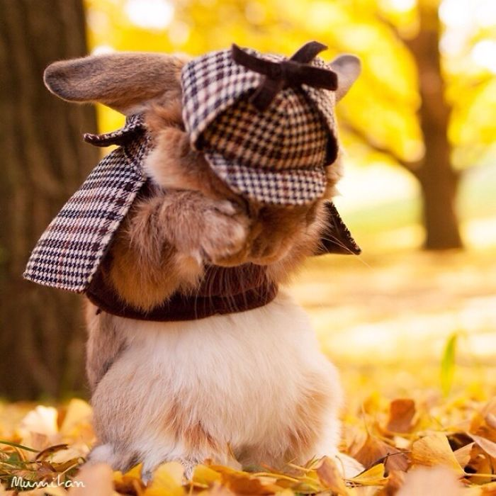 Cute Photographs of Most Stylish Bunny (9)
