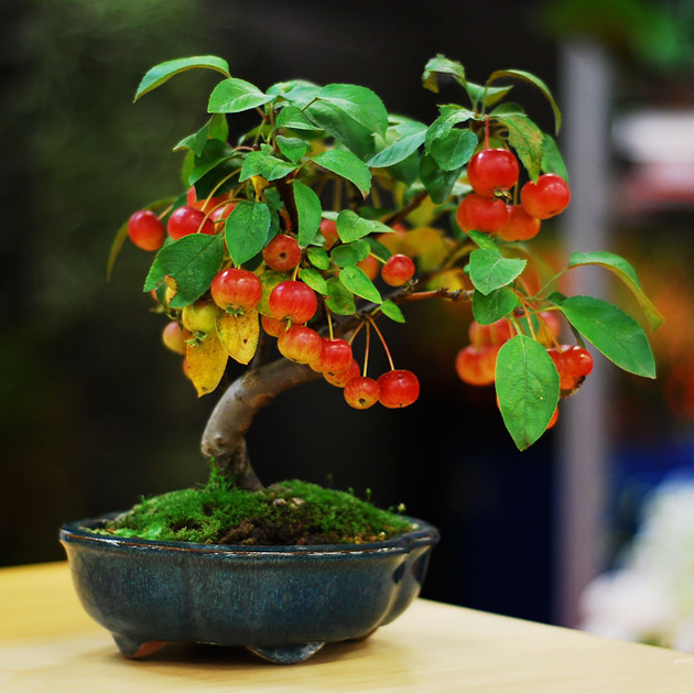 Most Evergreen Beautiful Bonsai Trees (14)