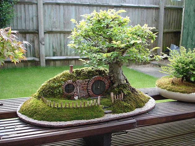 Most Evergreen Beautiful Bonsai Trees (6)
