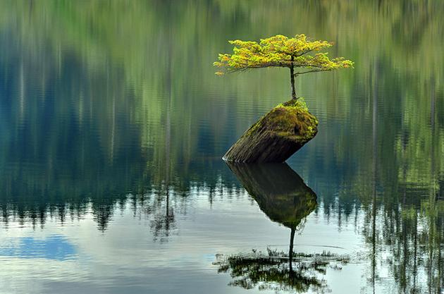 Most Evergreen Beautiful Bonsai Trees (7)