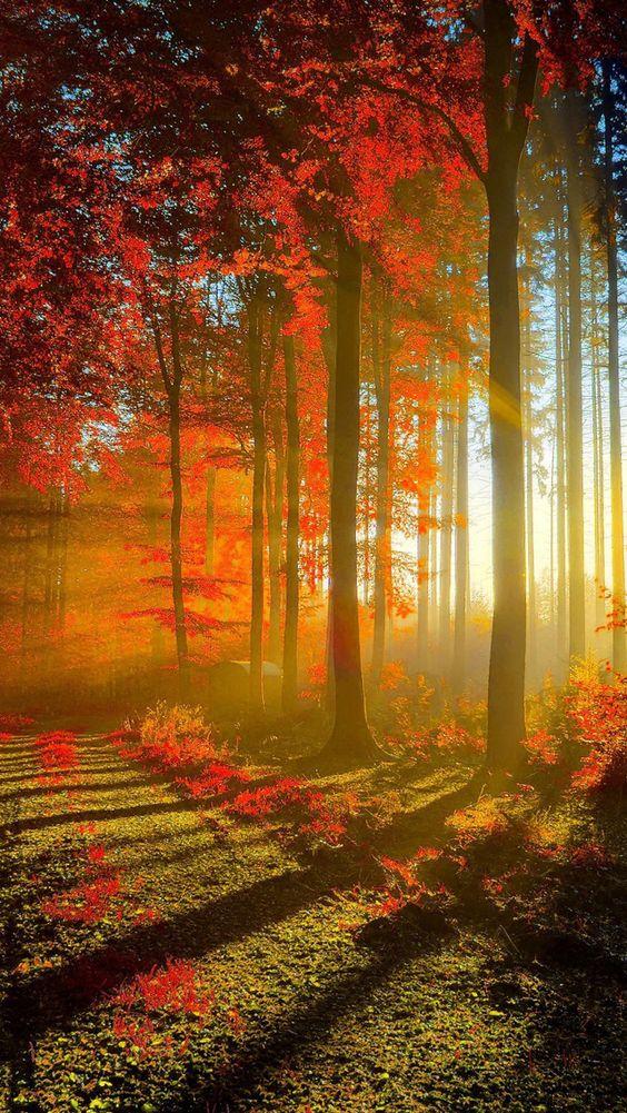 Stunning Sunrise Photos (6)