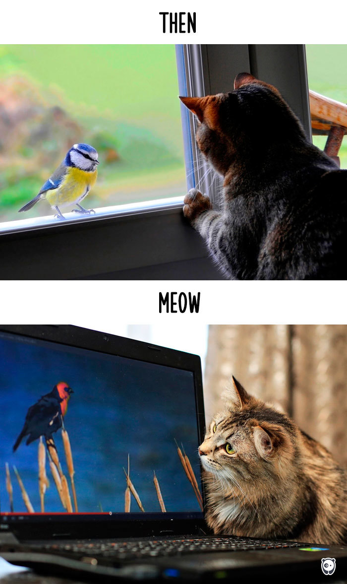 Then vs Meow How Technology Has Changed Cats Life (1)