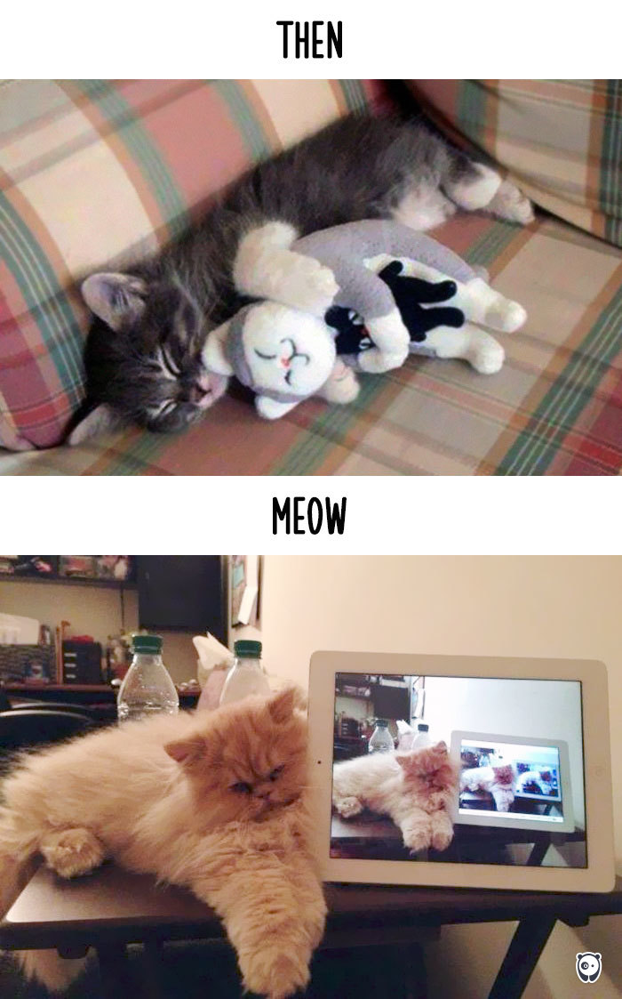 Then vs Meow How Technology Has Changed Cats Life (10)