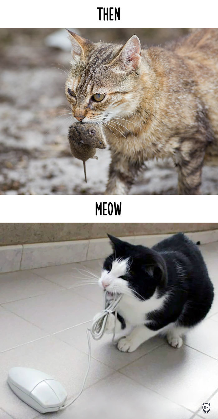 Then vs Meow How Technology Has Changed Cats Life (3)