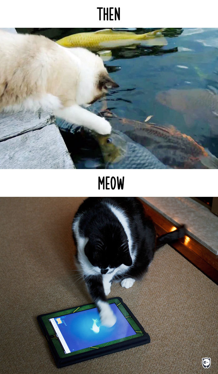 Then vs Meow How Technology Has Changed Cats Life (4)