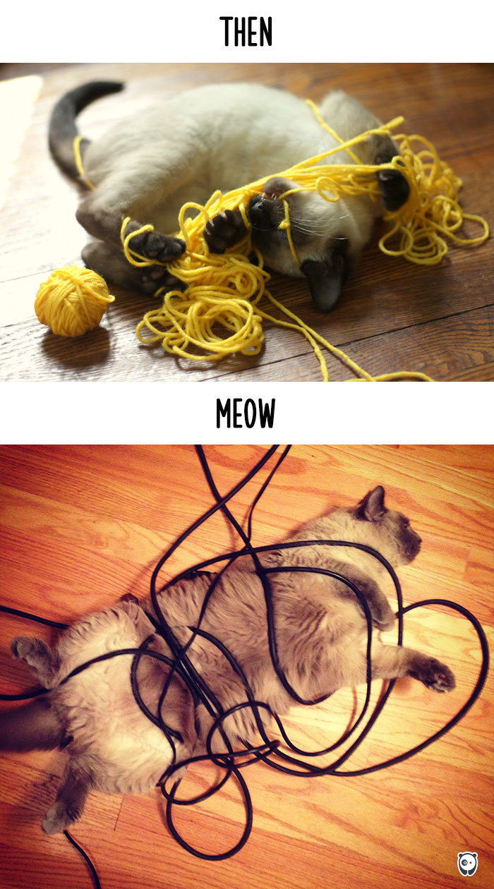 Then vs Meow How Technology Has Changed Cats Life (7)
