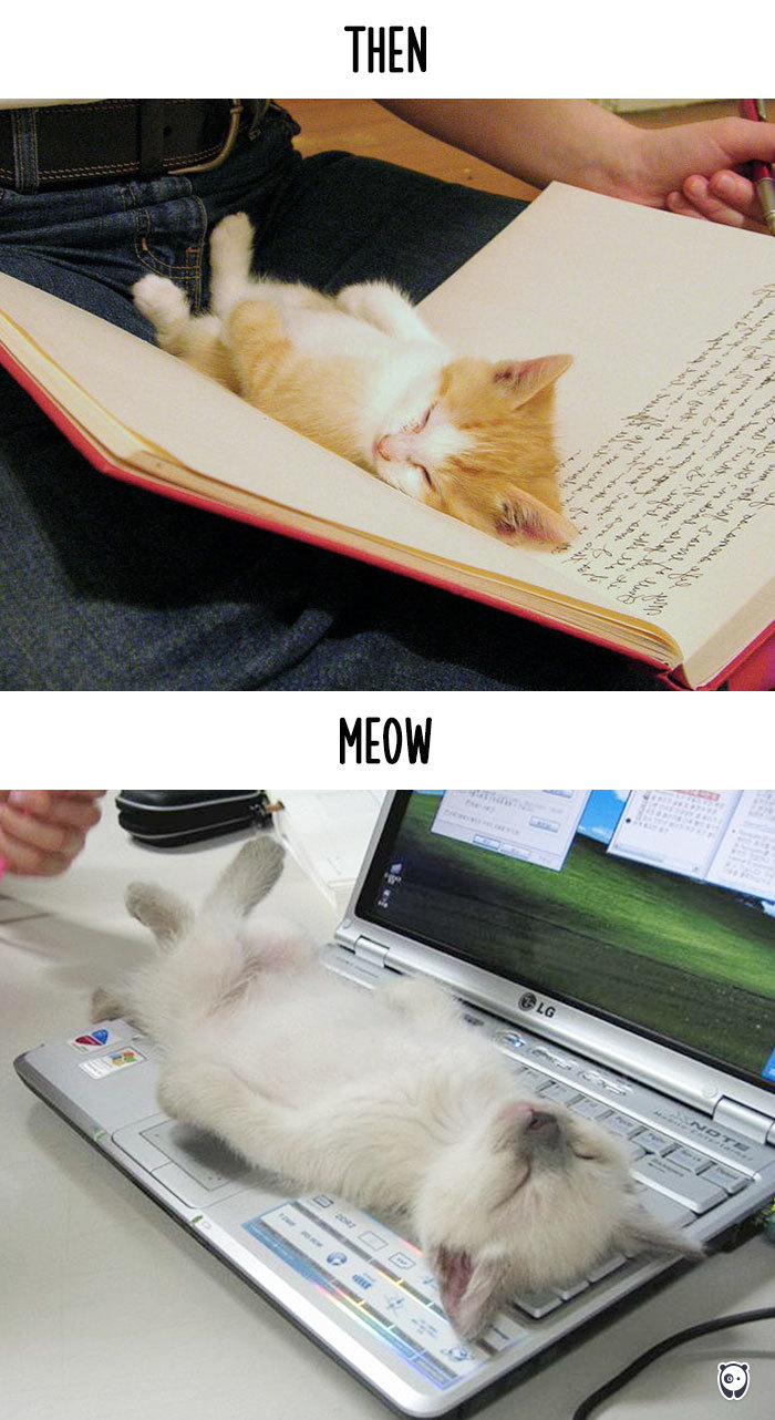 Then vs Meow How Technology Has Changed Cats Life (8)