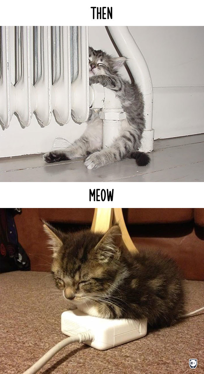 Then vs Meow How Technology Has Changed Cats Life (9)
