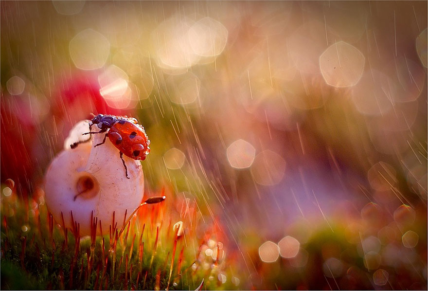 Polish photographer creating fairytale macro world (10)