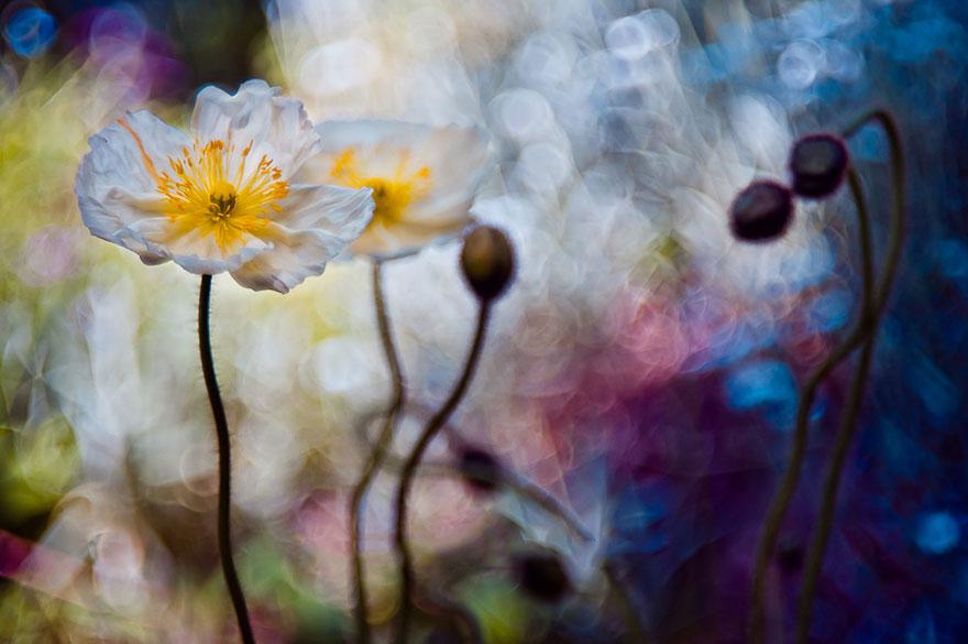 Polish photographer creating fairytale macro world (11)