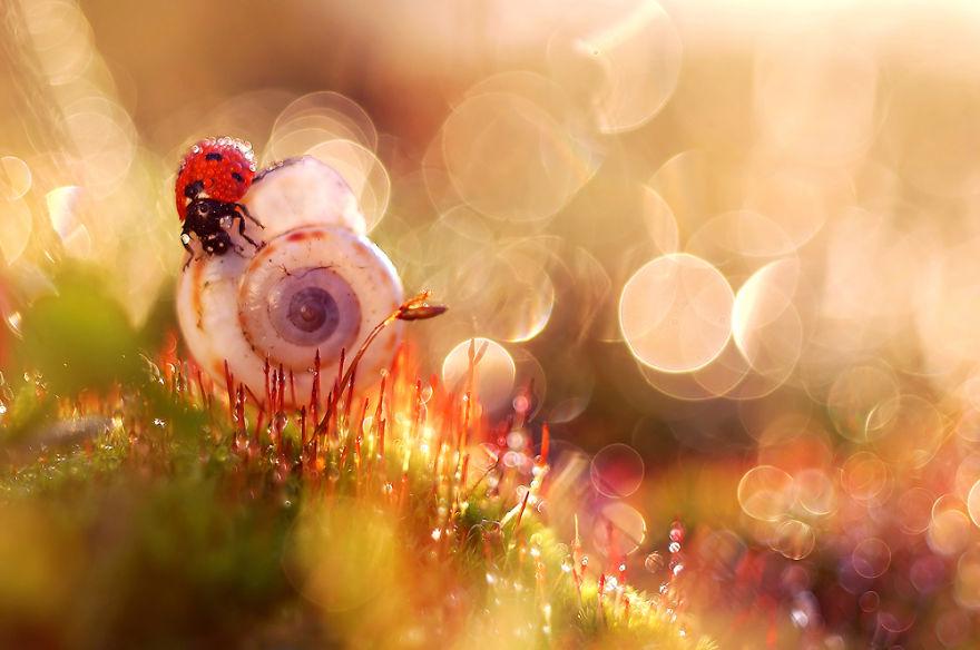 Polish photographer creating fairytale macro world (13)