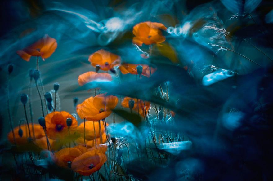 Polish photographer creating fairytale macro world (14)