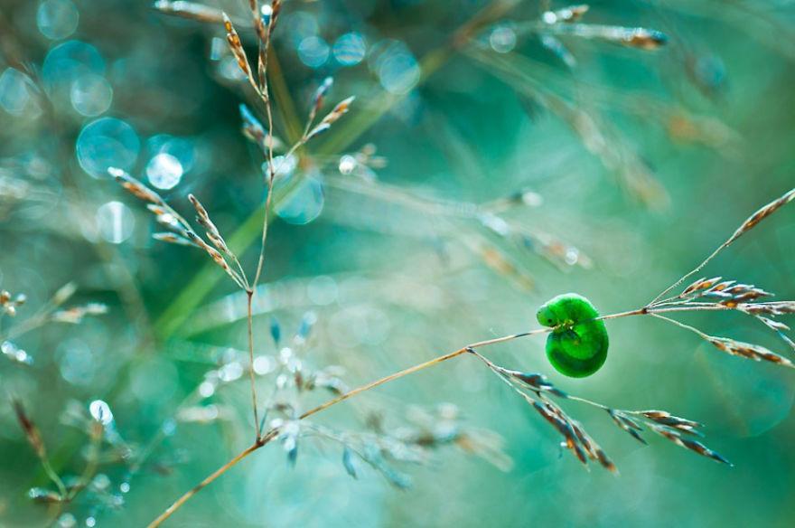 Polish photographer creating fairytale macro world (2)