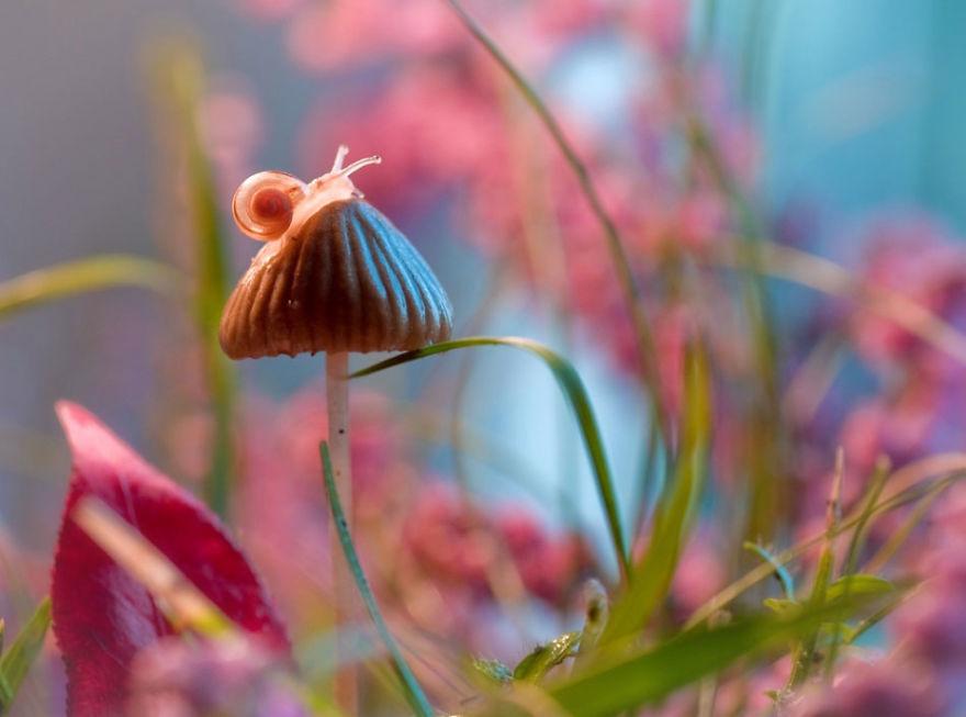 Polish photographer creating fairytale macro world (4)