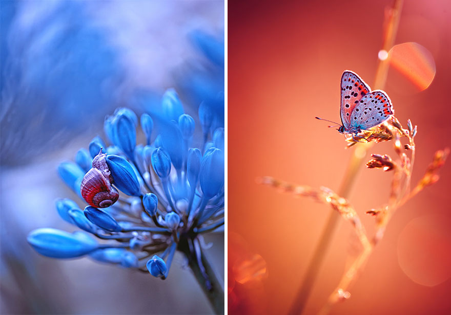 Polish photographer creating fairytale macro world (7)